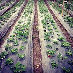 Propones la plantación de jardines de verduras en espacios públicos.